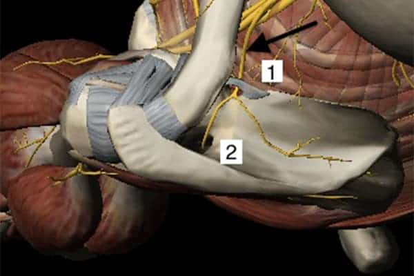 compression du nerf supra scapulaire symptome nerf supra scapulaire douleur chirurgien epaule paris chirurgien nerfs paris maladie atteintes nerfs peripheriques docteur patrick houvet