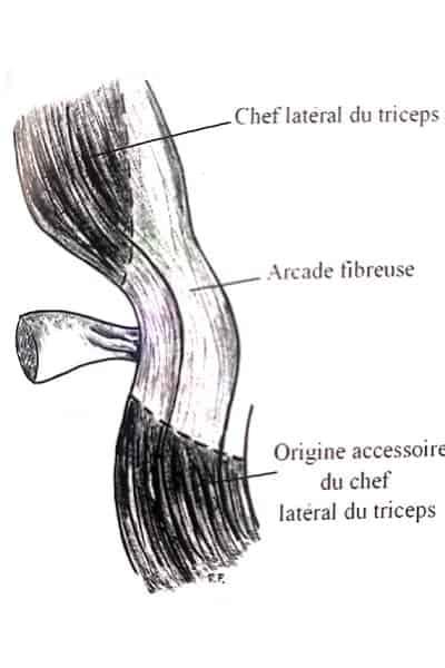 compression nerf radial syndrome de lotem chirurgien bras paris chirurgien nerfs paris maladie atteintes nerfs peripheriques docteur patrick houvet