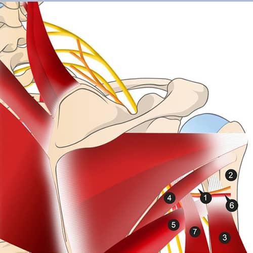 douleurs epaules omoplates douleur epaule lever bras chirurgien epaule paris chirurgien nerfs paris maladie atteintes nerfs peripheriques docteur patrick houvet