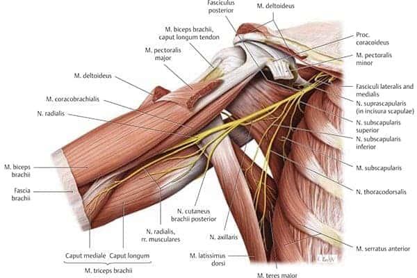 excision nerfs median cutanes ulnaire musculo cutane epaule main paris chirurgien nerfs paris maladie atteintes nerfs peripheriques docteur patrick houvet
