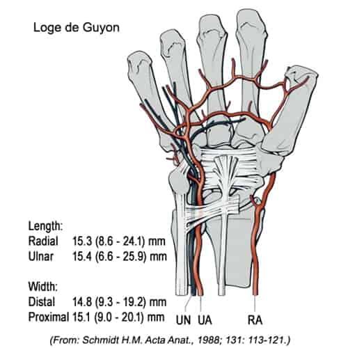 nerf cubital loge guyon poignet nerf cubital symptome chirurgien poignet paris chirurgien nerfs paris maladie atteintes nerfs peripheriques docteur patrick houvet