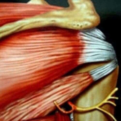 paralysie epaule paralysie brachiale chirurgien epaule paris chirurgien nerfs paris maladie atteintes nerfs peripheriques docteur houvet