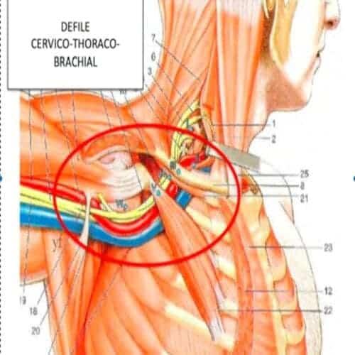 compression nerf cubital coude maladie professionnelle nerf cubital coude chirurgien coude paris chirurgien nerfs paris maladie atteintes nerfs peripheriques docteur patrick houvet