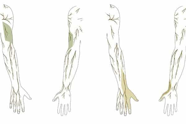 territoires sensitifs nerf radial au membre superieur droit epaule main paris chirurgien nerfs paris maladie atteintes nerfs peripheriques docteur patrick houvet
