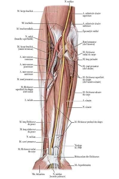 trajet ante brachial nerf ulnaire droite epaule main paris chirurgien nerfs paris maladie atteintes nerfs peripheriques docteur patrick houvet