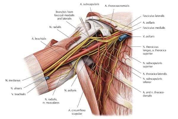 vue antero mediale epaule droite epaule main paris chirurgien nerfs paris maladie atteintes nerfs peripheriques docteur patrick houvet